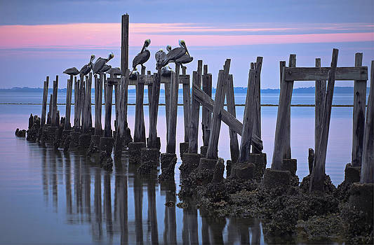 Bill Chambers - Pelicans on Pilings