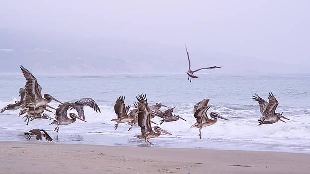 Rochelle Villanueva - Pelicans Take to the Air