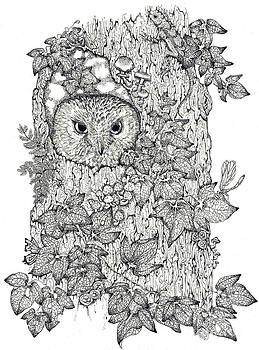 Pen and Ink Owl by Donna Genovese