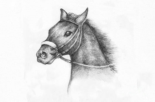 Pencil Drawing of a horse by Kiril Stanchev