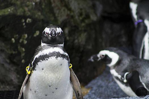 Penguin by Audrey Elisabeth