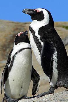 Ramona Johnston - Penguin Love