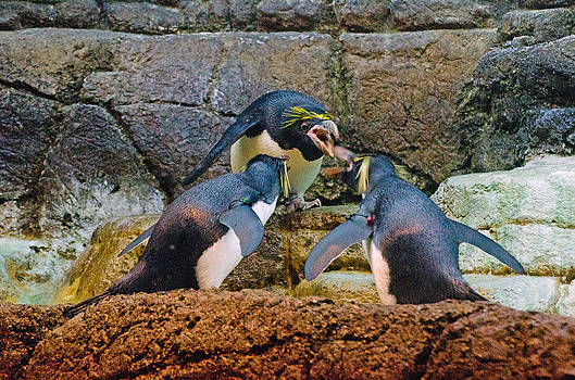 Penguin talk by Cheryl Cencich