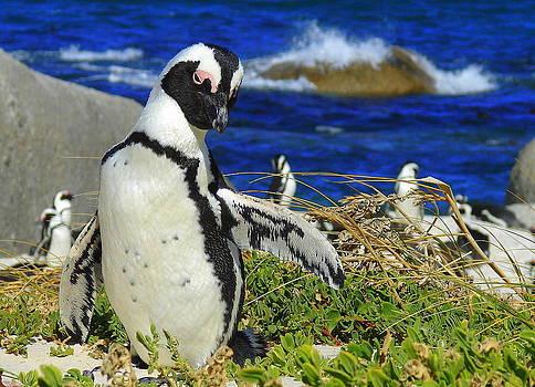 Ramona Johnston - Penguin Waving