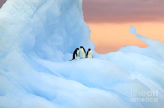 Penguins on iceberg at sunset by Rosemary Calvert