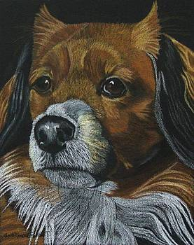 Penny - Lhaso Apso Mix - Commission by Anita Putman