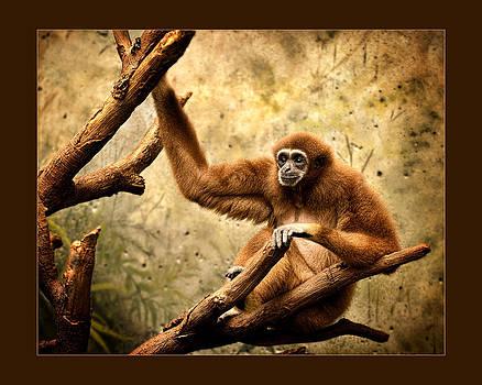 Pensive Primate by Kerri Garrison
