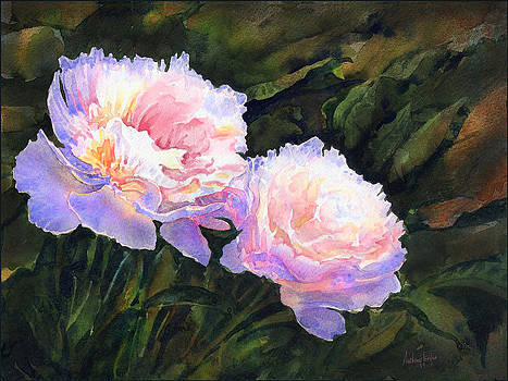 Anthony Forster - Peonies