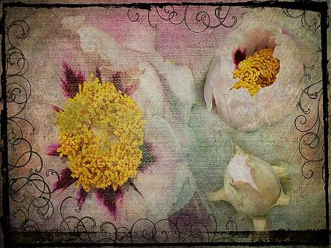 Peonies by Carolyn Meuer-Pickering of Photopicks Photography and Art
