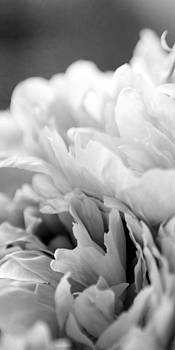 Peonies by Cathy Walters