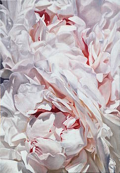 Peonies petals 55 x 38cm by Thomas Darnell