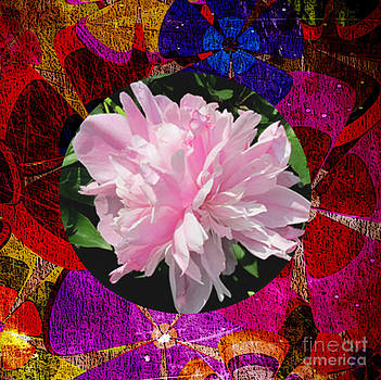 Peony in Colorful Hues by Norma Boeckler