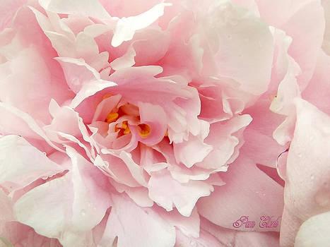 Peony Petals by Pam Clark