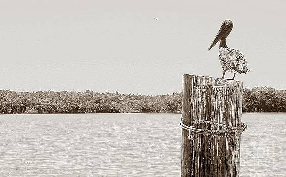 Perched Pelican by Jeanne Forsythe