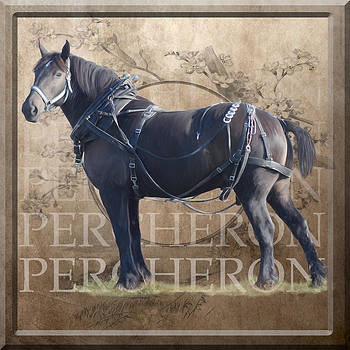 Percheron Draft Horse in Harness by Bethany Caskey