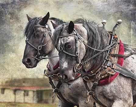 Percheron Team by Judy Neill