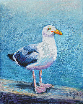 Percy the Seagull by Bethany Bryant