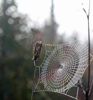 Perect Web by Carol Oberg Riley