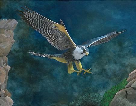 Peregrine Falcon by Marsha Friedman