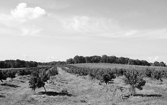 Perfect Autumn Day on Alstede Farm BW by Maureen E Ritter
