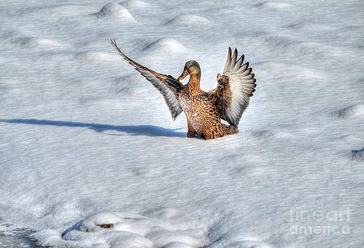 Perfect Landing by Skye Ryan-Evans