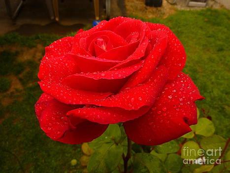 Perfect Wet Bloom by Katherine Karsten