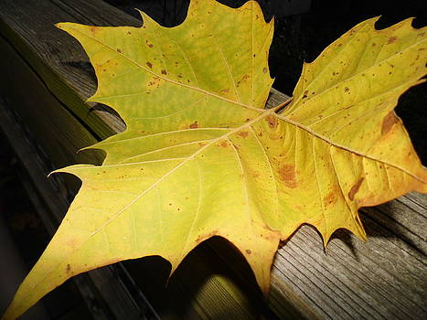 Perfectly Balanced Leaf by Kay Sparks