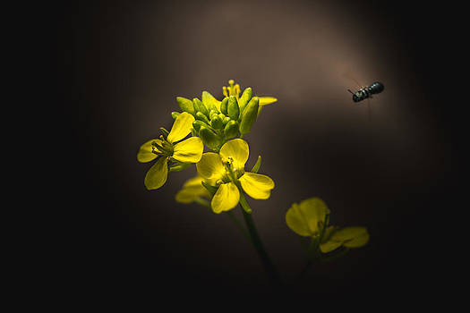 Permission To Land by Paul Barson