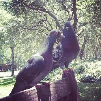 Perplexed Pigeons by Bradley Belcher