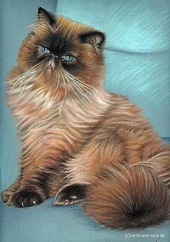 Persian Cat by Nicole Zeug