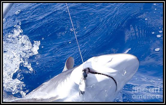 Agus Aldalur - Pesca de Tiburon
