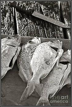Agus Aldalur - Pescados