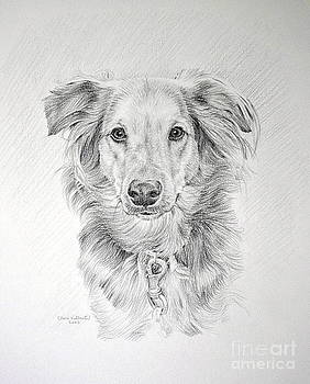 Pet Dog by Clare Villanti