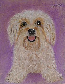 Pet dog by David Hawkes