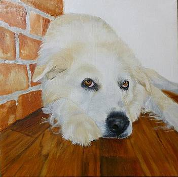 Pet Portrait Great Pyrenees Original Oil Painting on Canvas 10 x 10 inch by Shannon Ivins