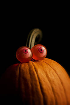 Pet Pumpkin by Bailey and Huddleston