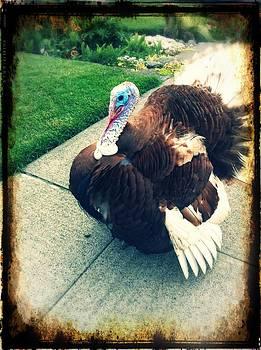 Pet Turkey by Tonya Mower Zitman
