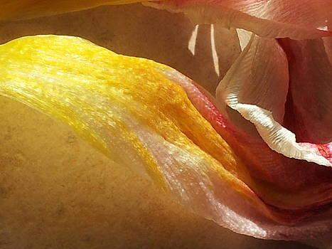 Petals 2 by Melania Emma