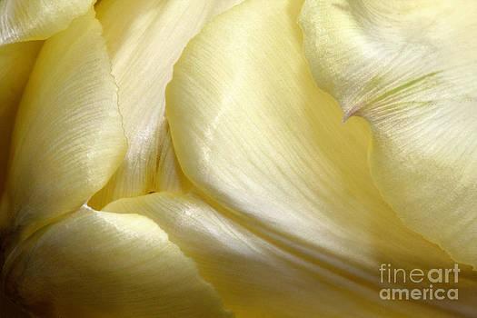 Petals by Guy St-Vincent