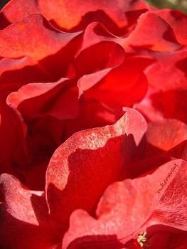 Petals  by Natalya Karavay