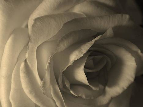 Petals of a Rose by Anastasia Gregg