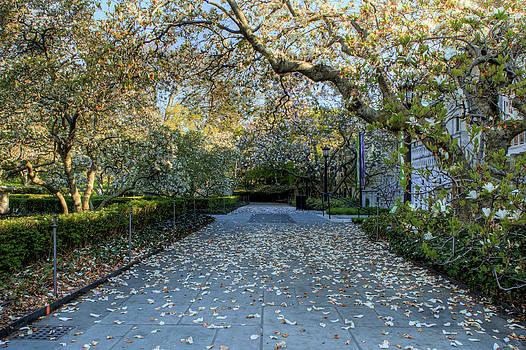 David Hahn - Petals on the Walk