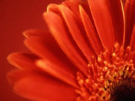 Petals by Studio Maeva
