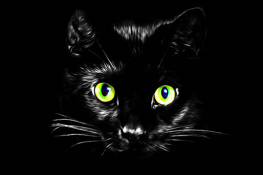 Petit Chat Noir by Ashley King