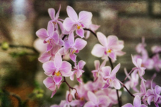 Petite Orchids by Joan Bertucci