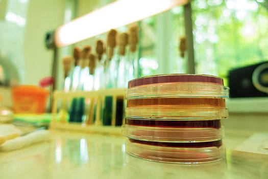 Petri Dishes In Lab by Wladimir Bulgar