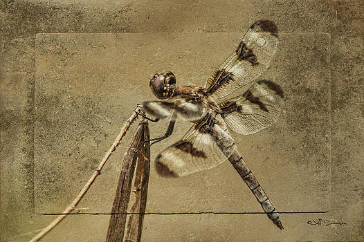 Petrified Dragonfly by Jeff Swanson