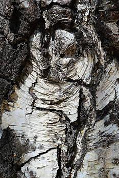 Donna Blackhall - Petrified Owl