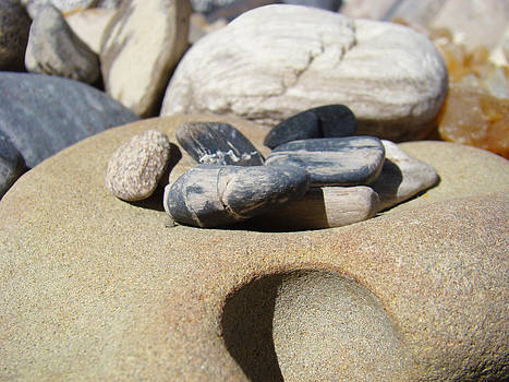 Baslee Troutman - Petrified Wood Beach Fossils art prints