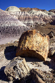Douglas Taylor - PETRIFIED WOOD - BLUE MESA